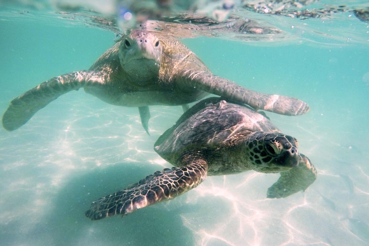 Kaneohe Sandbar Turtle Watching & Snorkeling Tour / PM