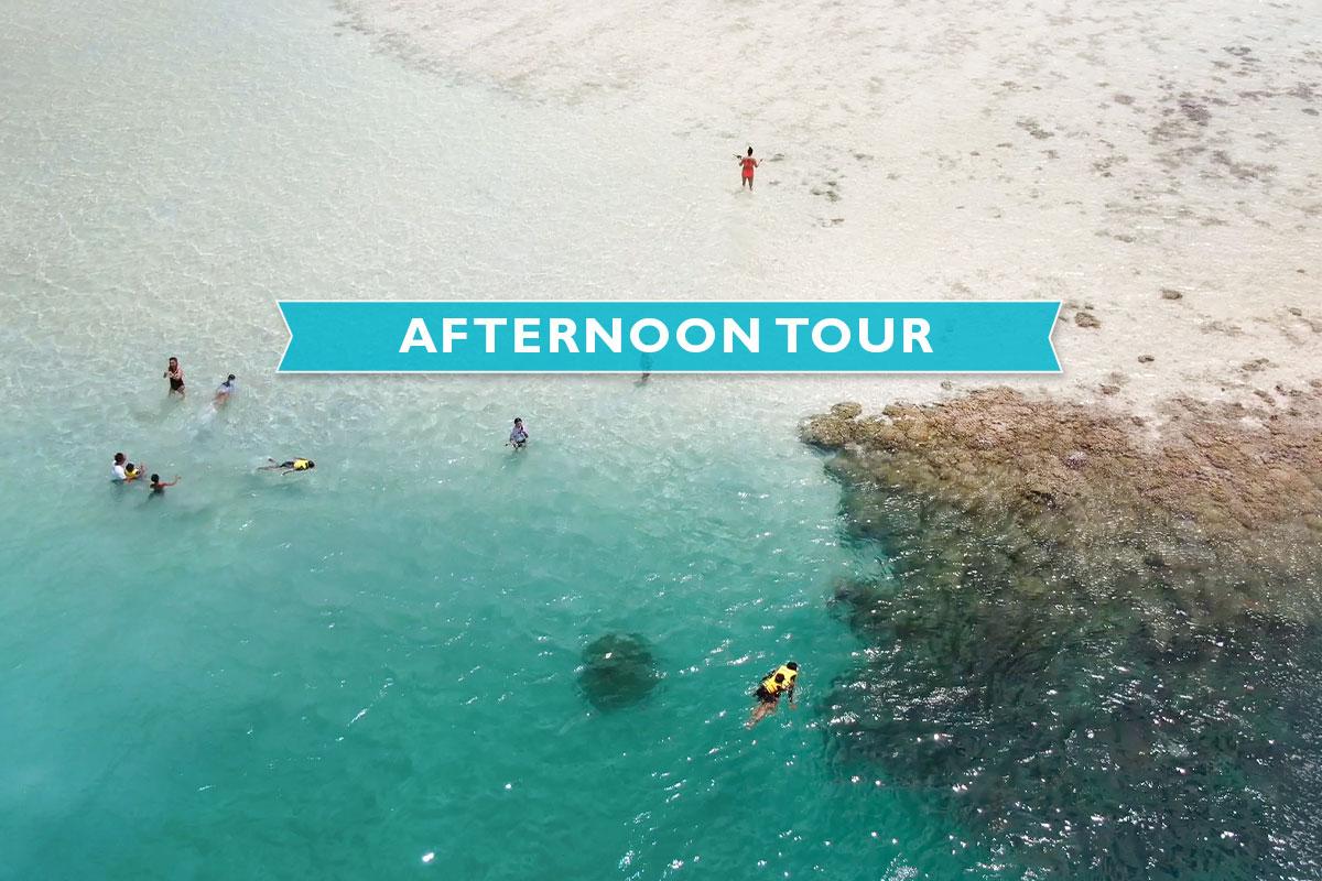 ★Kaneohe Sandbar Turtle Watching & Snorkeling Tour [PM]