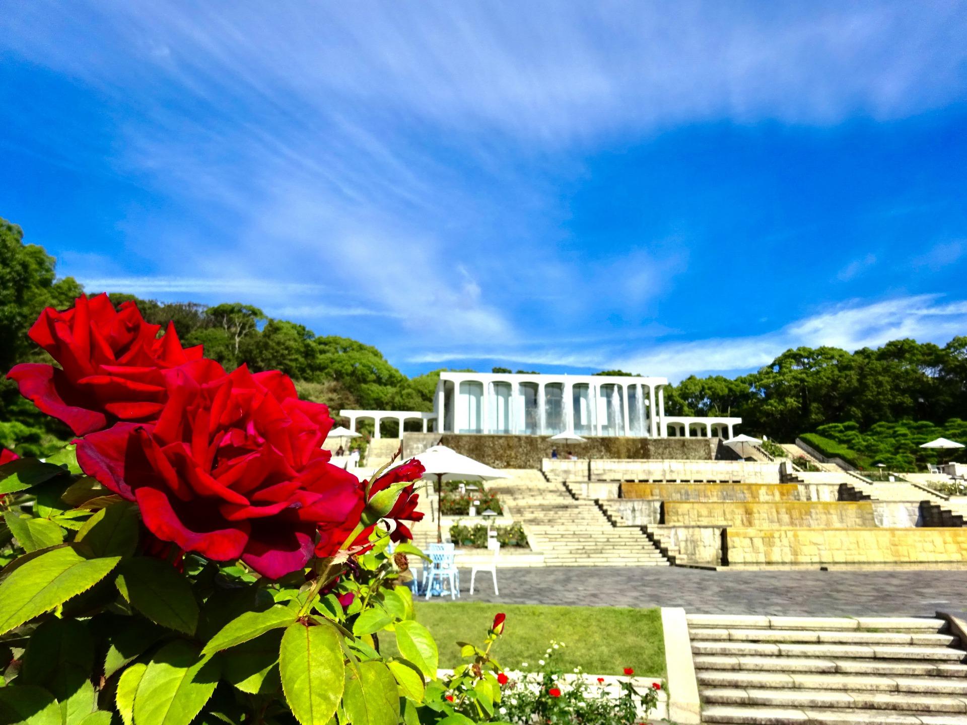 【開催中止】バラの咲き誇る須磨離宮公園と神戸迎賓館この日限りの特別ランチ